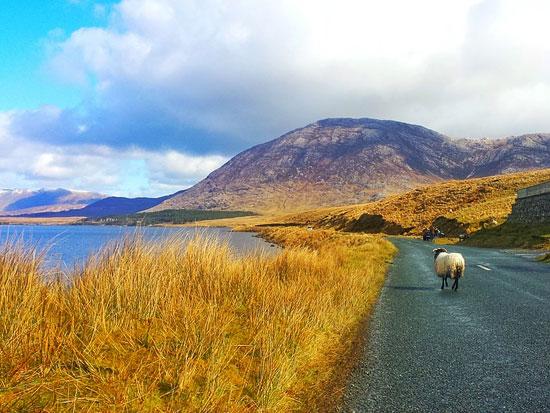 immagine per Tour Irlanda Ovest
