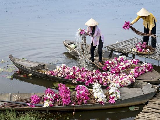 immagine per Tour Vietnam Express