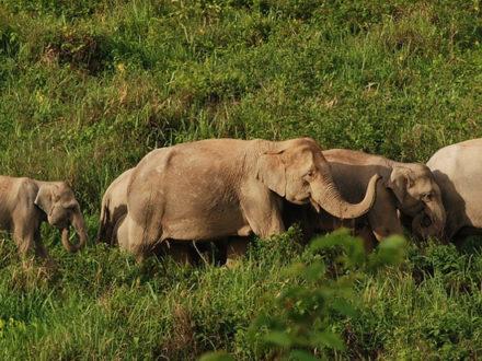 immagine per Thailandia Eco Elephant Experience
